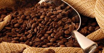 Kopi_Luwak_Coffee1